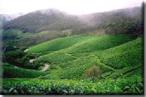 Romantic Kerala Holidays - Munnar