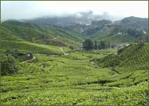 vacation in darjeeling sikkim, himalaya tour, travel to himalaya, himalayan mountain range